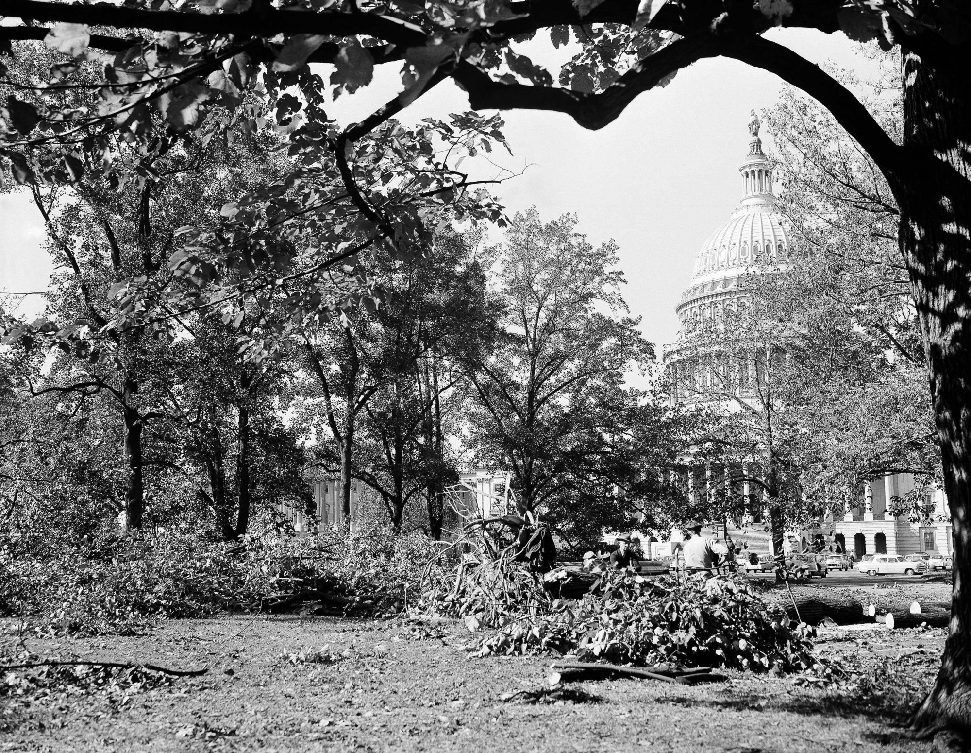 Workmen are busy in Washington, disposing of trees felled on the U.S. Capitol grounds last night by Hurricane Hazel, Oct. 16, 1954. Damage was reported to 27 trees in the area. (AP Photo)