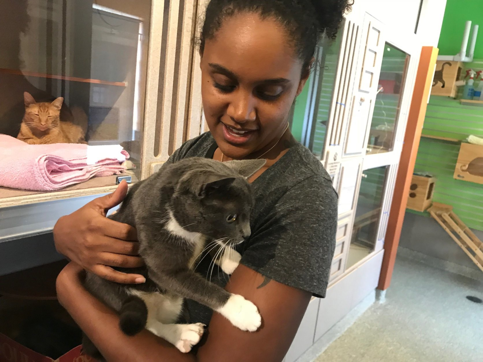 Lady, a one-year-old gray cat with white feet and a white chest, found a new home in College Park, Maryland, after she was adopted at the Humane Rescue Alliance in D.C. (WTOP/Dick Uliano)