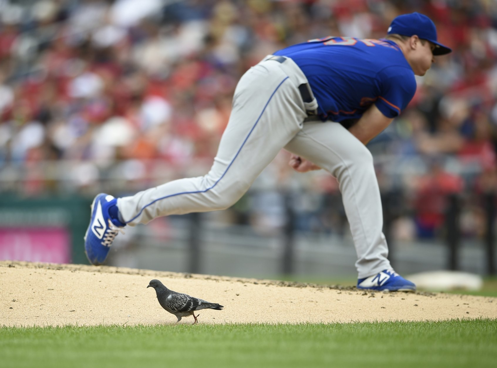 A bird stands by the mound as New York Mets starting pitcher Corey Oswalt follows through on a pitch during the third inning of a baseball game against the Washington Nationals, Saturday, Sept. 22, 2018, in Washington. (AP Photo/Nick Wass)