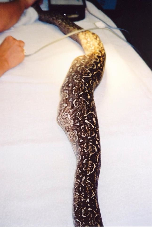 A picture of the glass bottle swallowed by the massive snake. (Courtesy of Dr. Katy Nelson)