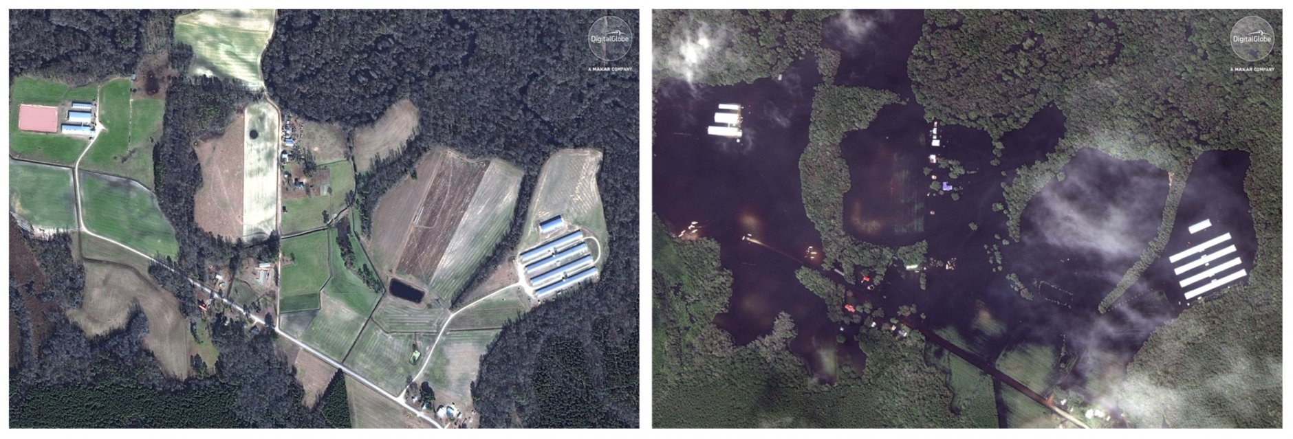 This combination of satellite images shows a farm on Jan. 13, 2017, left, and after Hurricane Florence moved through the area on Sept. 17, 2018, near Trenton, N.C. (DigitalGlobe, a Maxar company via AP)