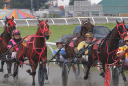 Harness racers in a cluster at the Grandstand at the Great Frederick Fair. (WTOP/Kate Ryan)