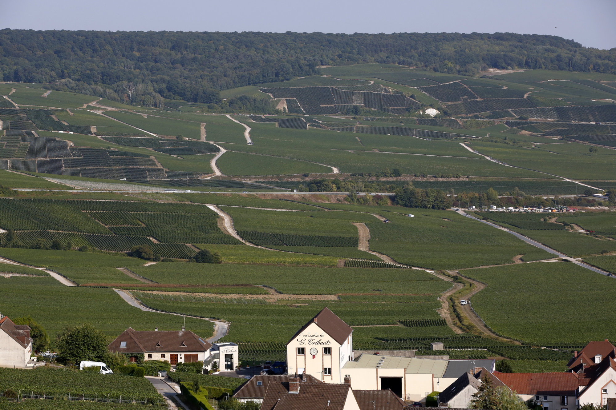 In this photo taken on Tuesday, Aug. 28, 2018 a view of the Champagne vineyards in the Champagne region, in Hautvillers, eastern France. Temperatures have risen 1.2 degrees Celsius (2.16 F) in 30 years, and pickers are scrambling to bring in yet another early harvest. The specter of climate change is haunting the vineyards of France, and its creeping effects, including chaotic weather, are becoming the new normal. (AP Photo/Thibault Camus)