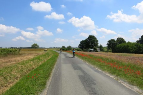Wine of the Week: My bike journey through France's Loire Valley