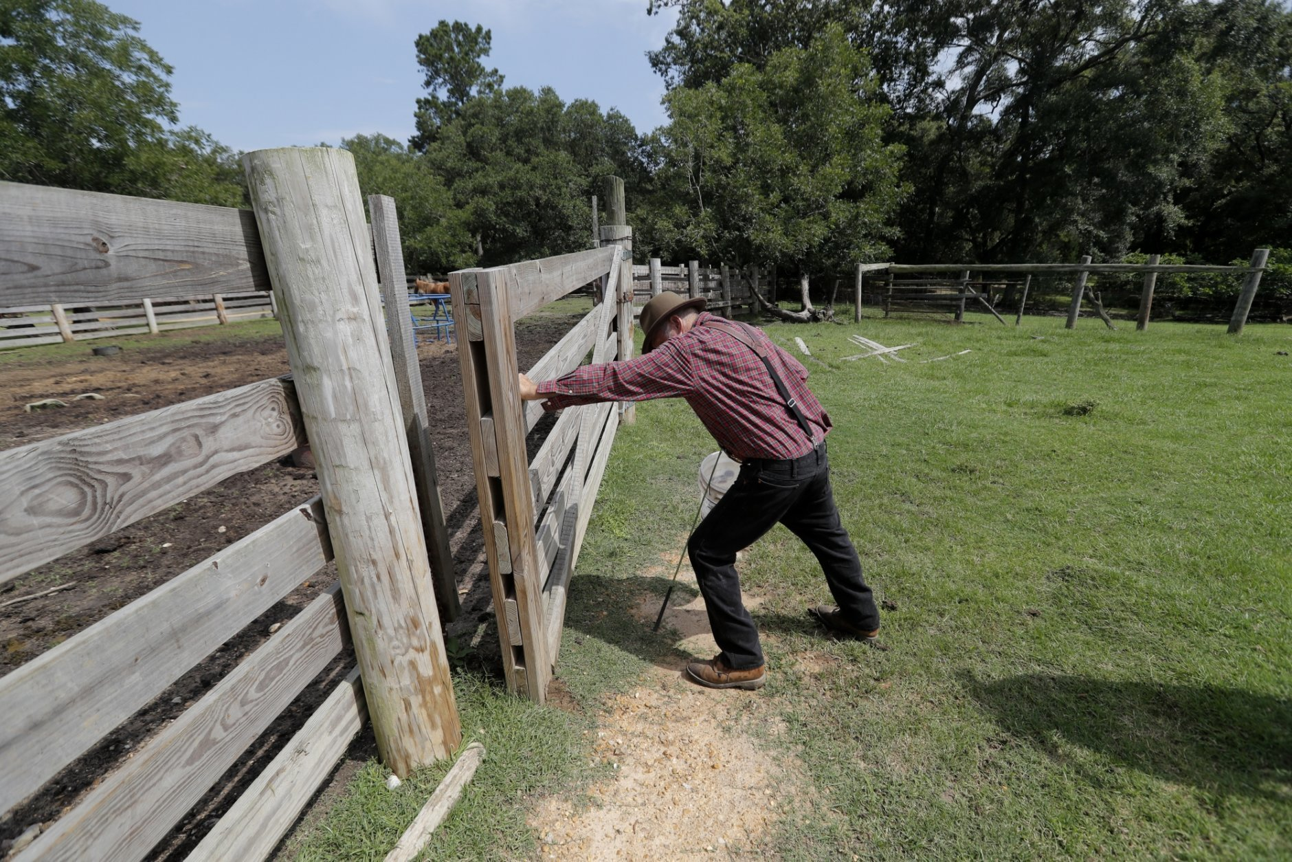 In this July 17, 2018, photo, Bill Frank Brown closes a pen as he walks to feed his horses on his farm in Poplarville, Miss. The farm had been in Brown's family since 1881 and the livestock there, even longer. Brown had three stallions back then, including DeSoto. He called them pine tacky horses. The Texas A&M veterinary school tested samples of the stallions' DNA, and they matched those of Rickman's Choctaws. (AP Photo/Gerald Herbert)