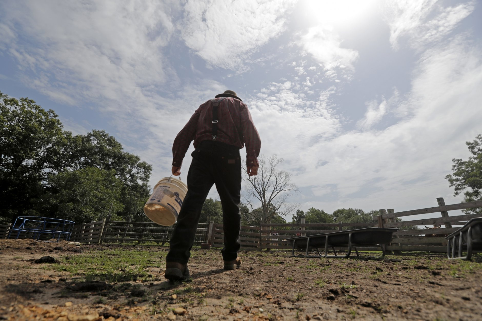 In this July 17, 2018, photo, Bill Frank Brown walks to feed his horses on his farm in Poplarville, Miss. The farm had been in Brown's family since 1881 and the livestock there, even longer. Brown had three stallions back then, including DeSoto. He called them pine tacky horses. The Texas A&M veterinary school tested samples of the stallions' DNA, and they matched those of Rickman's Choctaws. (AP Photo/Gerald Herbert)