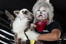 In this Wednesday, Oct. 24, 2018, photo provided by the Florida Keys News Bureau, Patti Bridges shows her dog, Cousin Itt, during the Fantasy Fest Pet Masquerade in Key West, Fla. The competition was a facet of events during the island city's 10-day Fantasy Fest costuming and masking celebration. (Rob O'Neal/Florida Keys News Bureau via AP)