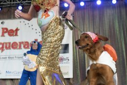 In this Wednesday, Oct. 24, 2018, photo provided by the Florida Keys News Bureau, Meredith Dunning competes with her dog Scuppers during the Fantasy Fest Pet Masquerade in Key West, Fla. The competition was a facet of events during the island city's 10-day Fantasy Fest costuming and masking celebration. (Rob O'Neal/Florida Keys News Bureau via AP)
