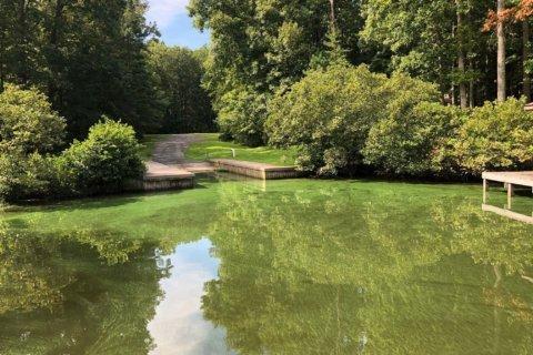Harmful algae bloom prompts 'no swimming advisories' for Virginia's Lake Anna
