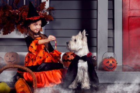 4 tricks to keep your pets safe this halloween