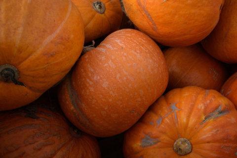 8 pumpkin recipe ideas that actually contain pumpkin