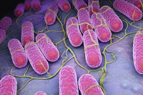Salmonella outbreak tied to raw chicken products sickens 92 people in 29 states: CDC
