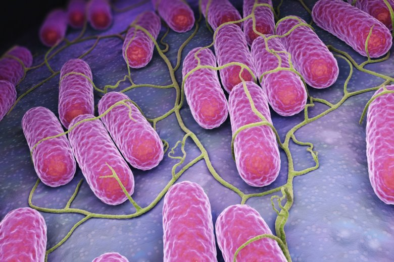 Drug-resistant salmonella linked to raw chicken in 29 states — CDC