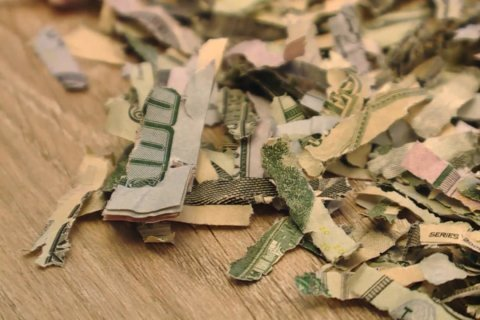 Toddler shreds over $1,000 his parents saved to pay a debt
