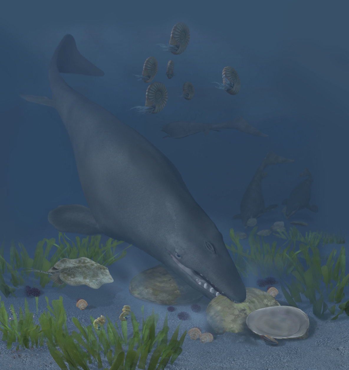 An artist's rendering of the mosasaur Globidens phosphaticus crunching huge hard-shelled oysters on a shallow ocean shelf off of Angola's coast 72 million years ago. (Karen Carr Studios, Inc.)