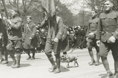 From mascots to heroes: Animals that served in WWI