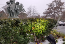 Snow collects on plants and statues in Northwest D.C. (WTOP/Will Vitka)