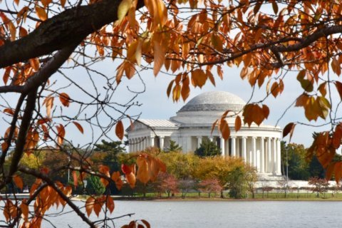 DC area might be in for vibrant fall colors this year