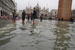Tourists look at a swimming bird in flooded St. Mark's Square in Venice, Italy, Thursday, Nov. 1, 2018 as rainstorms and strong winds have been battering the country. Two people were killed when a falling tree crushed their car in the mountainous countryside in northwestern Italy, as rainstorms and strong winds continued to pummel much of the country. (AP Photo/Luca Bruno)
