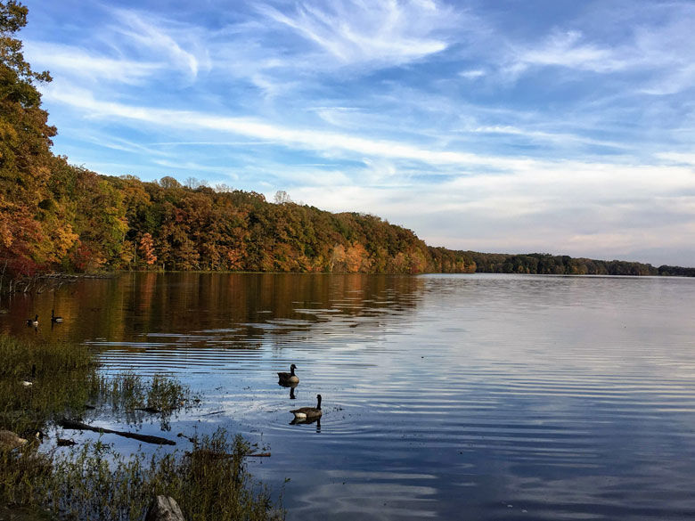 A view of the ducks enjoying Burke Lake in Fairfax County, Virginia. (Courtesy Christina Taylor)
