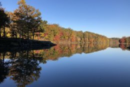 Twitter user Alvin Chee shared photos of the beautiful fall colors at Lake Needwood in Montgomery County, Maryland. (Courtesy @AlvinChee2020)