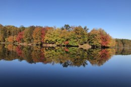 The bright orange, reds and yellows are reflected in the water of Lake Needwood in Montgomery County, Maryland. (Courtesy @AlvinChee2020)