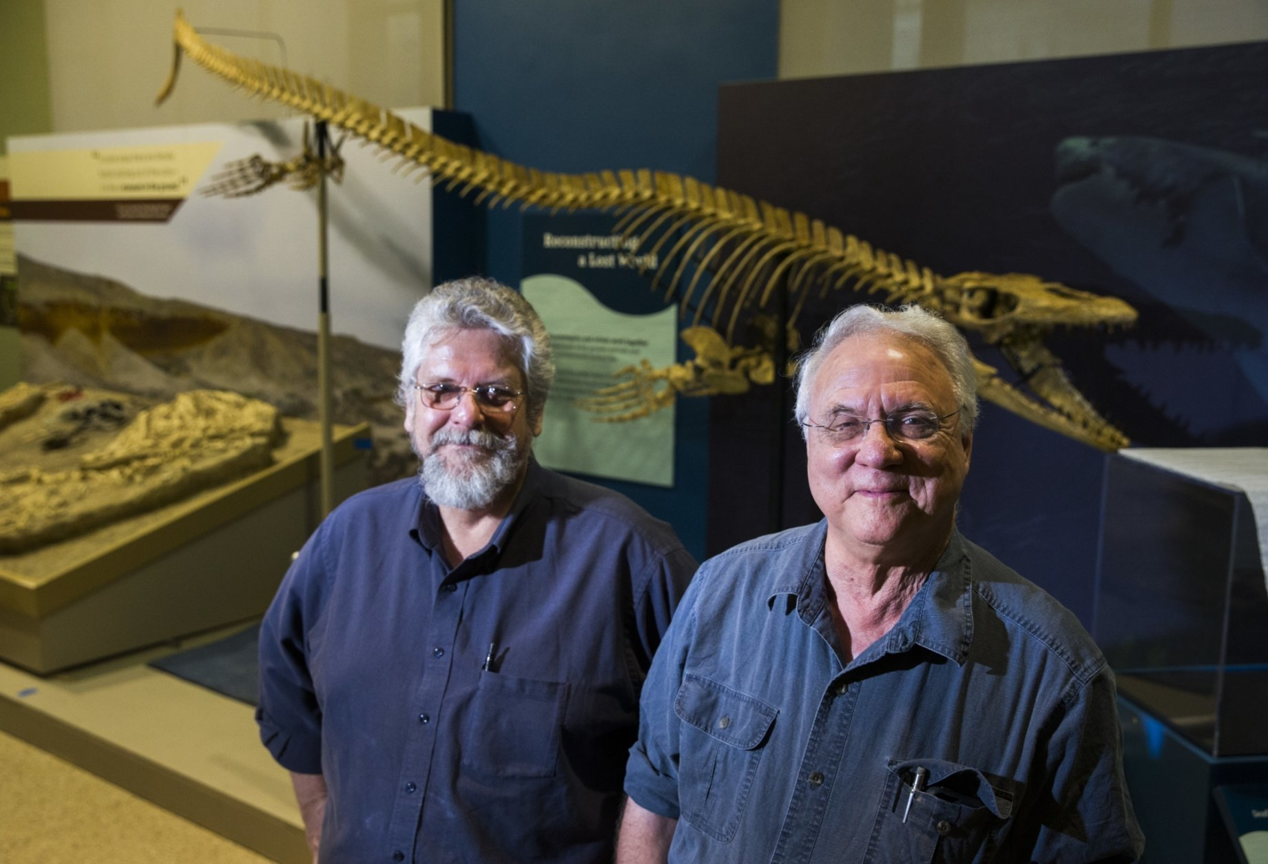 From left, professor Michael Polcyn, senior research fellow and instructor for Study of Earth and Man at SMU and Dr. Louis Jacobs, professor emeritus of earth science and president of ISEM at SMU, pose for a photo in their Sea Monsters exhibit on Oct. 23, 2018 at the Smithsonian National Museum of Natural History in Washington.  The exhibit features Angolan mosasaurs that they and their team have unearthed over the last decade.  (Ashley Landis /The Dallas Morning News via AP)