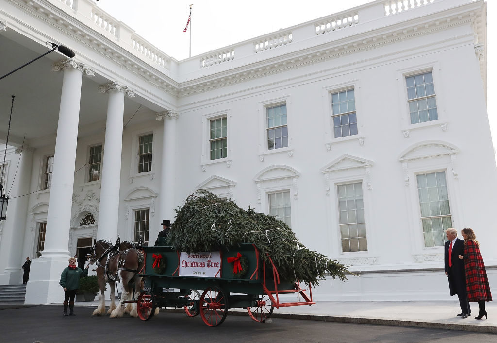 WASHINGTON, DC - NOVEMBER 19:  U.S. President Donald Trump and first lady Melania Trump inspect the North Carolina grown Fraser Fir Christmas Tree at the North Portico as it makes its way to the Blue Room for display at the White House on November 19, 2018 in Washington, DC.  (Photo by Mark Wilson/Getty Images)