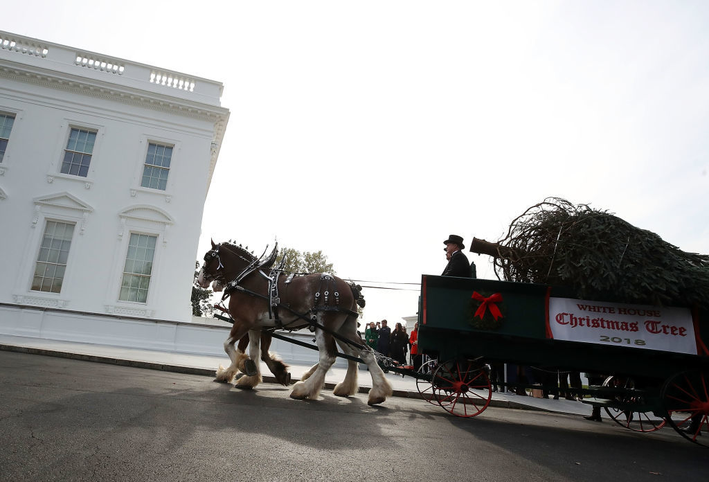WASHINGTON, DC - NOVEMBER 19: A horse drawn carriage delivers a North Carolina grown Fraser Fir Christmas Tree at the North Portico as it makes its way to the Blue Room for display at the White House on November 19, 2018 in Washington, DC.  (Photo by Mark Wilson/Getty Images)