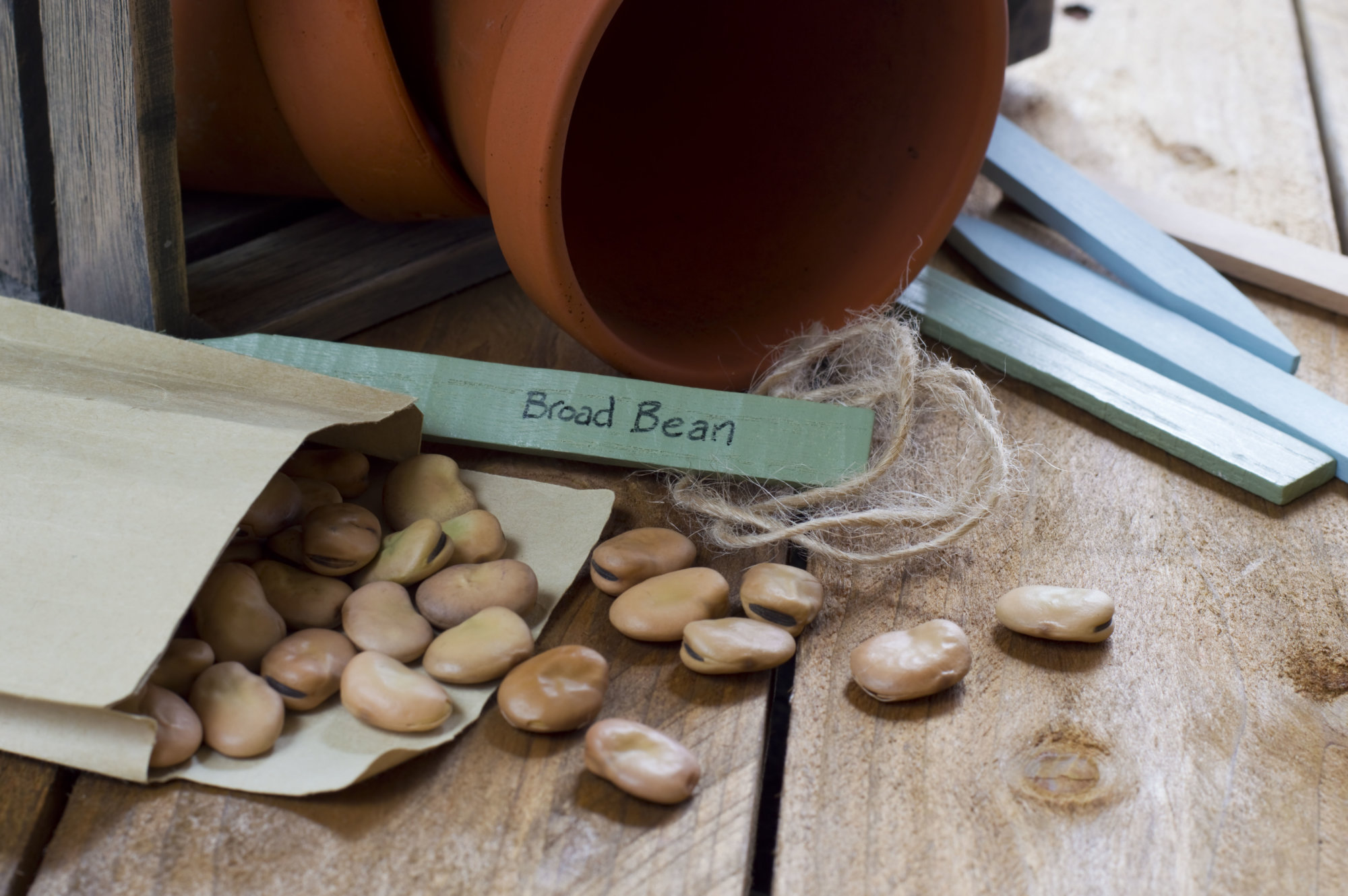 Image of potting shed and bean seeds