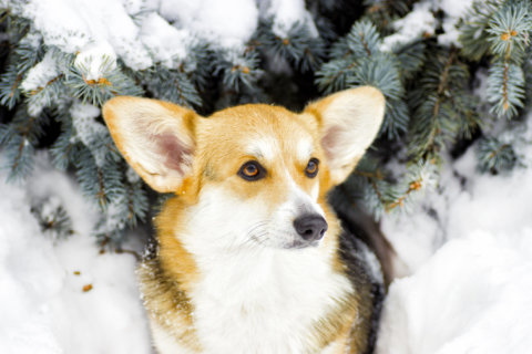 How to protect your dog from harsh winter weather