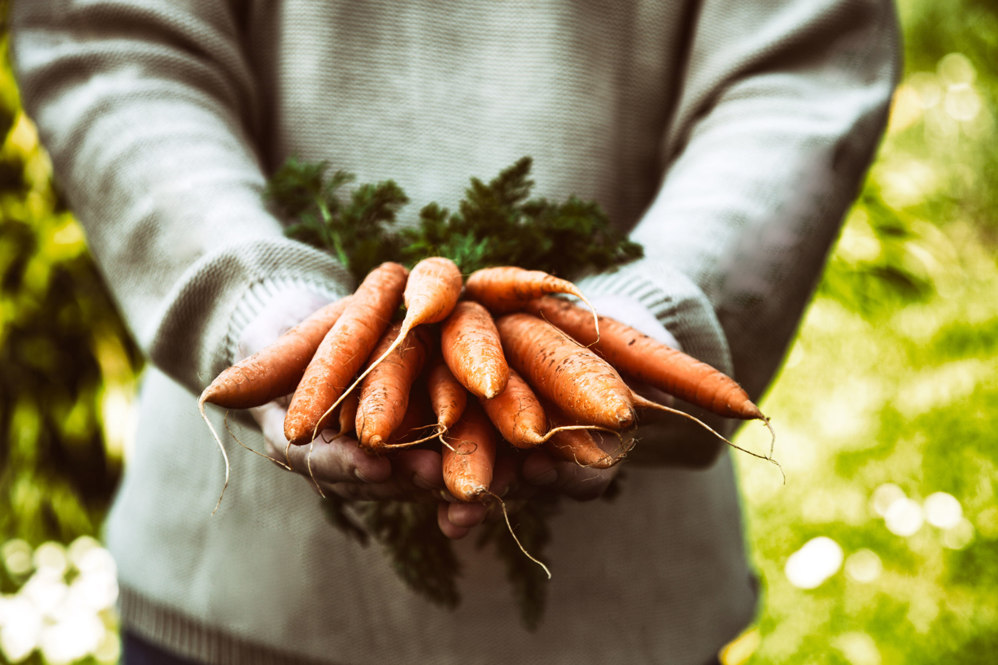 Mid-Atlantic gardeners can plant carrots this time of year, since the cold weather only makes them taste better. (Getty Images)