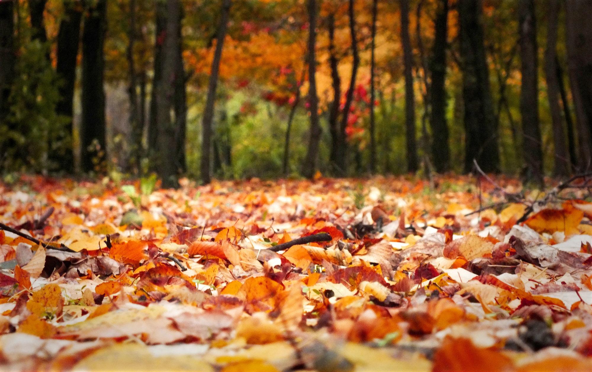 Autumn, Lawn, Public Park, Formal Garden, Sunset