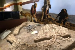 "Smithsonian's ""Sea Monsters Unearthed"" exhibit. (WTOP/Kristi King)"
