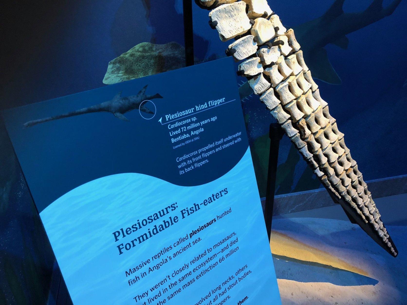 A fossilized plesiosaur flipper. (WTOP/Kristi King)