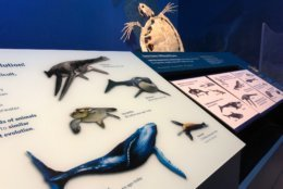 An illustration of some of the massive creatures that used to inhabit the South Atlantic. (WTOP/Kristi King)