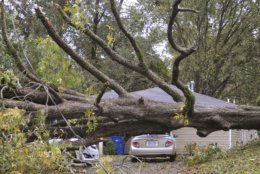 A large tree fell on the vehicles parked in the driveway of a Natchez, Miss., residence on Martin Luther King Jr. Street, Thursday, Nov. 1, 2018, during the storms that passed through the area Thursday morning, Nov. 1, 2018. (Ben Hillyer/The Natchez Democrat, via AP)