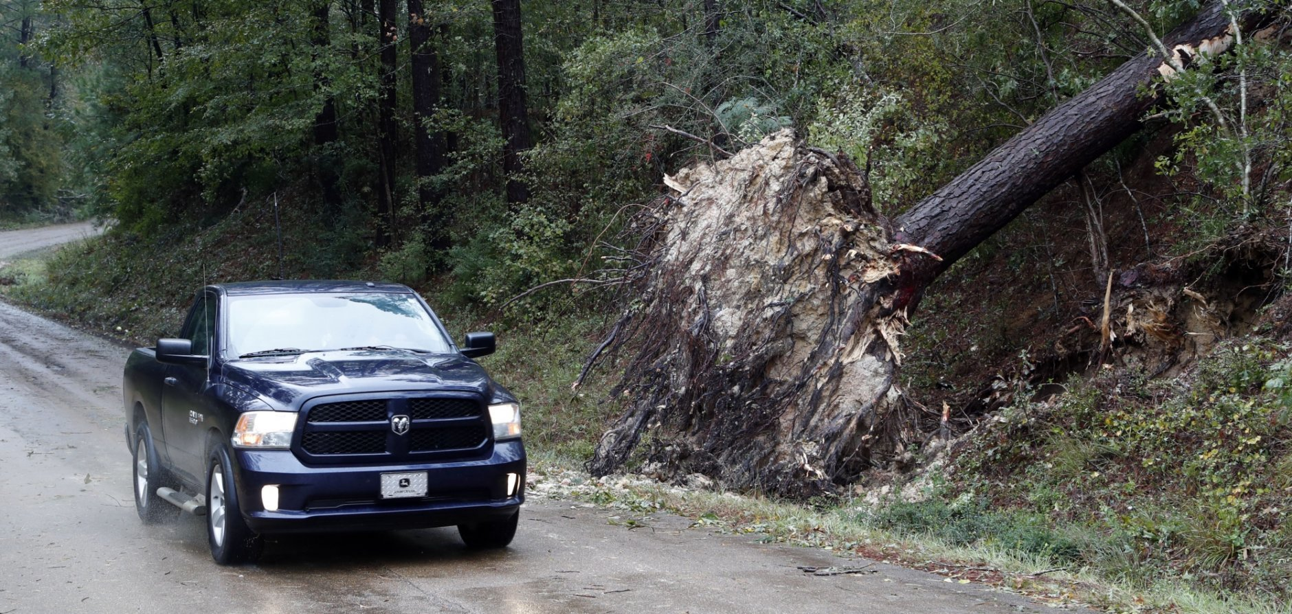 Strong storms and several possible tornadoes hit throughout Mississippi, early Thursday, Nov. 1, 2018., such as this one in Roxie, Miss., that toppled one of several trees in the Franklin County (AP Photo/Rogelio V. Solis)
