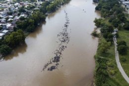A group of Central American migrants bound for the U.S. border wade across the Suchiate River that connects Guatemala and Mexico, in Tecun Uman, Guatemala, on Monday, Oct. 29, 2018. The first group was able to cross the river on rafts — an option now blocked by Mexican naval river and shore patrols. (AP Photo/Santiago Billy)