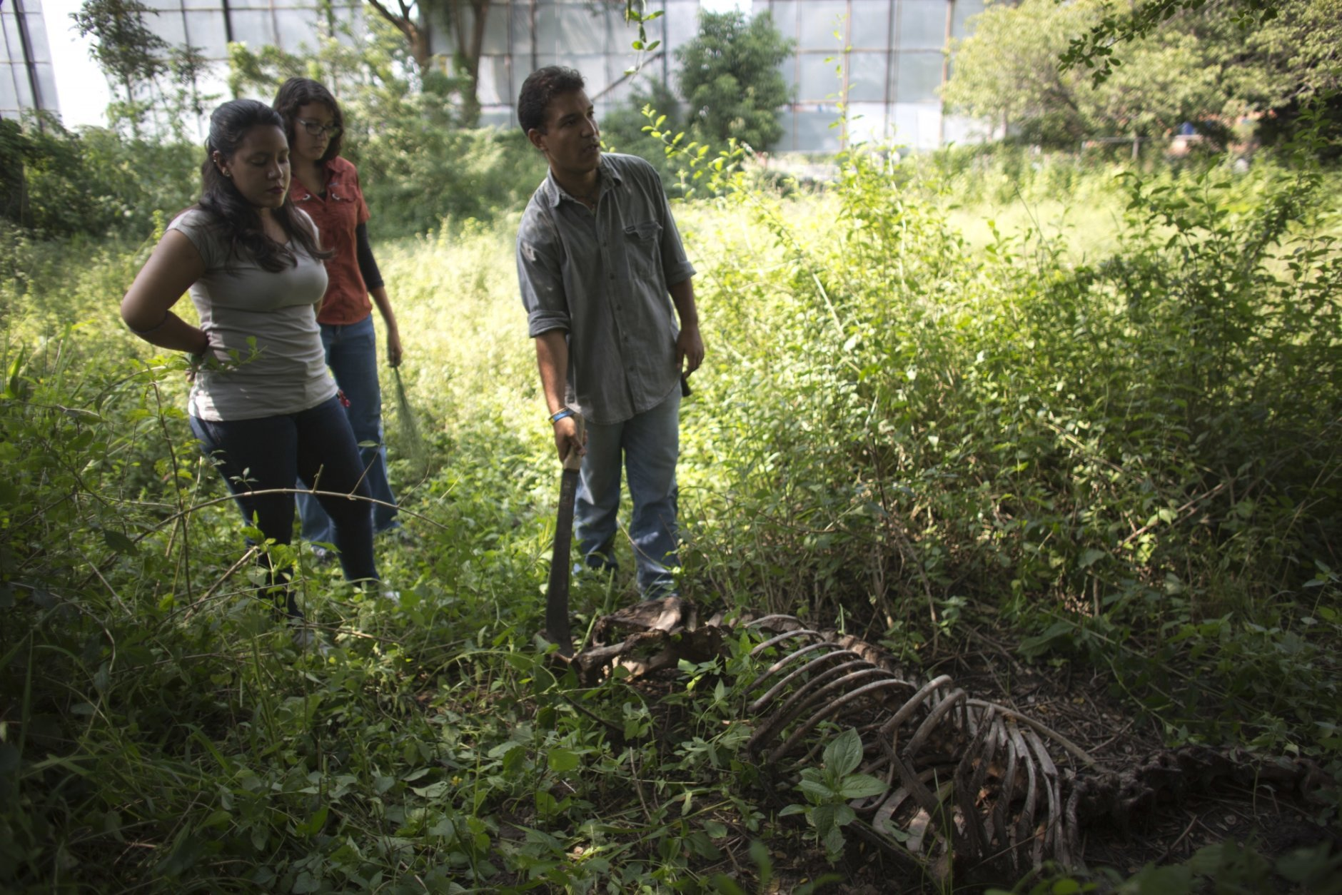 "In this Oct 26, 2018 photo, Rafael Toro, a student at Venezuela's top veterinary school points with a machete the skeleton of a horse called Miss Congeniality, as he is accompanied by others students, in the corner pasture of the sprawling campus at the Central University of Venezuela in Maracay, Venezuela. When the beloved horse was recently slaughtered for her meat by thieves, ""I burst into tears,"" said Toro, who delivered the grim news to other students. ""We came here, and together we all cried."" (AP Photo/Ariana Cubillos)"