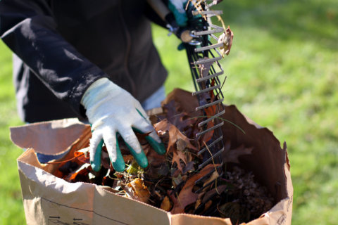Composting 101: Why beginners should stick to leaves, coffee grounds
