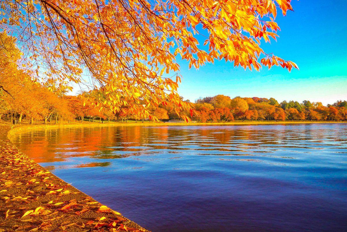 Fall colors along the Tidal Basin. (Courtesy @chris_fukuda)
