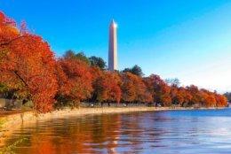 The Washington Monument surrounded by fall colors. (Courtesy @chris_fukuda)