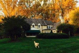 Richard LaFleur's dog enjoys a brisk run in the fall air. (Courtesy Twitter/Richard LaFleur)