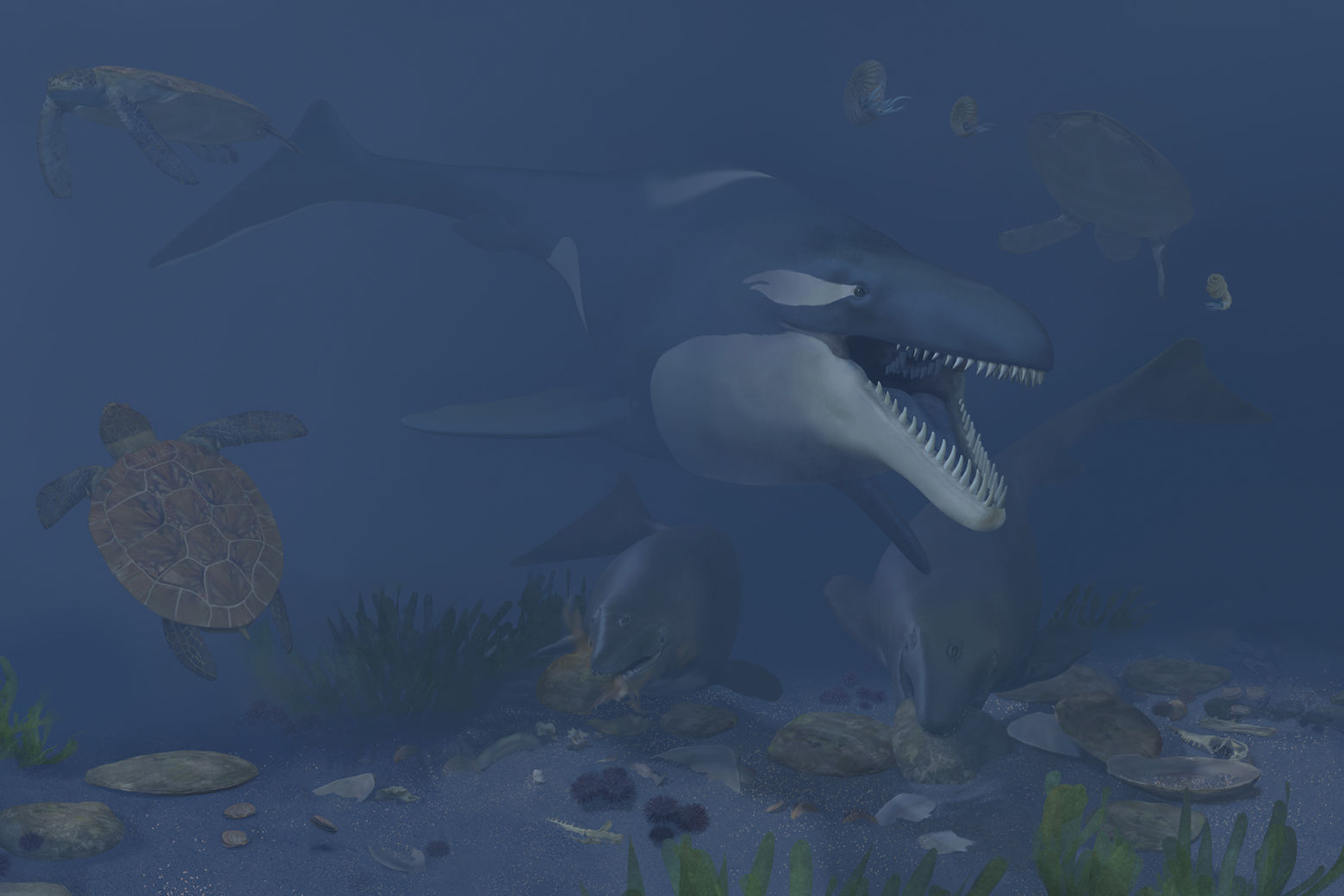 An artist's rendering of a 72-million-year-old ecosystem found off of coastal Angola. If you visited coastal Angola today, you could swim with whales and dolphins. But if you traveled back in time to the Late Cretaceous, you might not have wanted to jump in the water—it was filled with carnivorous reptiles, like mosasaurs and plesiosaurs. Even some of the sea turtles were enormous. (Courtesy Smithsonian/Karen Carr Studios, Inc.)