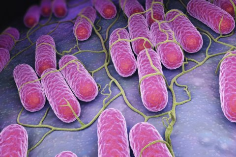 What to know about Salmonella after recent outbreaks have made hundreds ill