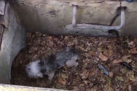 Dog named Toto rescued from storm drain after being missing for 3 days
