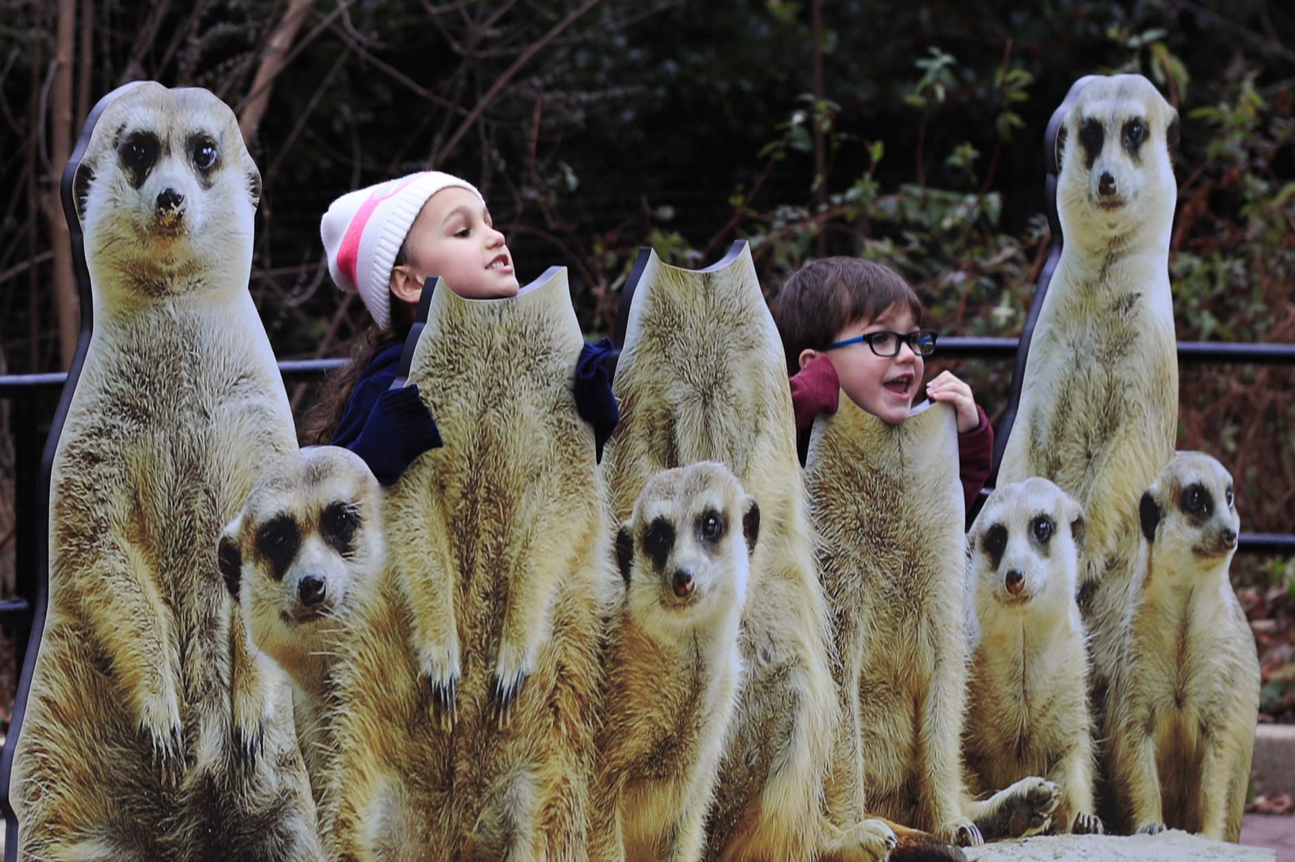 Maila and her brother Sammy Farag, play with meerkat cutout boards at the Smithsonian's National Zoo in Washington, Monday, Dec. 31, 2018. In the event of a prolonged government shutdown and Smithsonian's National Zoo closes, the zoo keepers will be working unpaid. (AP Photo/Manuel Balce Ceneta)