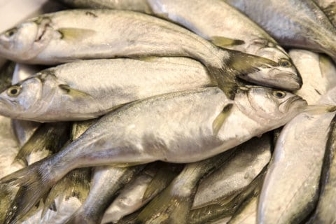 Virginia to celebrate fishing with open houses at hatcheries