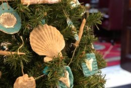 Guess which county tree features fossils and shells? It could only be the home of Calvert Cliffs—the Calvert County tree. (WTOP/Kate Ryan)